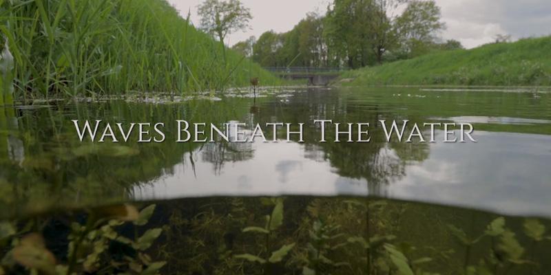 IWP Wildlife productions - Waves